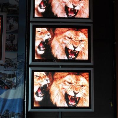 Ecrans avec lions